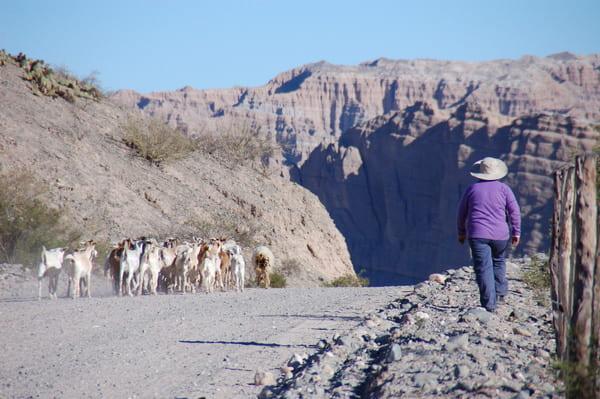Type de route à Salta
