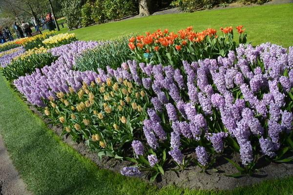 Tulipes de Keukenhof
