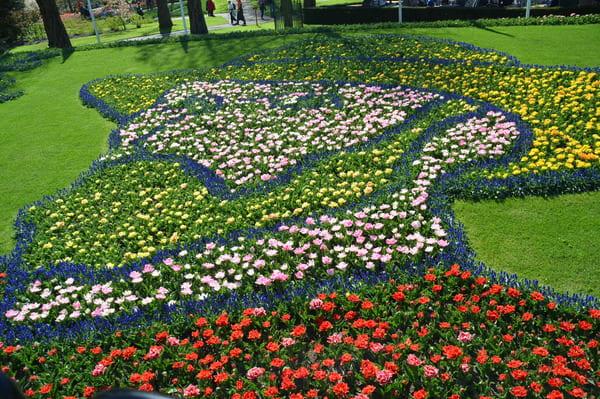 Tulipes formant visage de Van Gogh