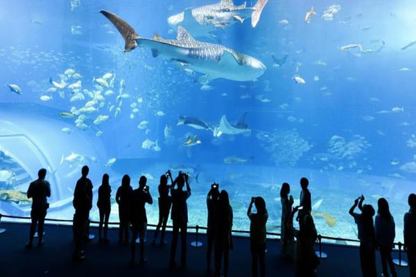 Visite de l'aquarium de Lyon