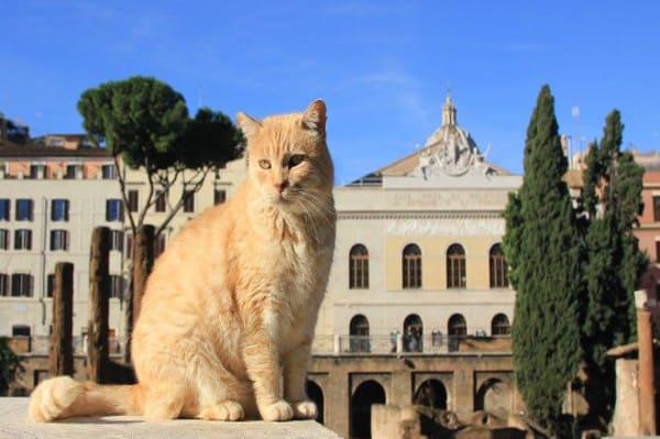 place de Rome avec des chats