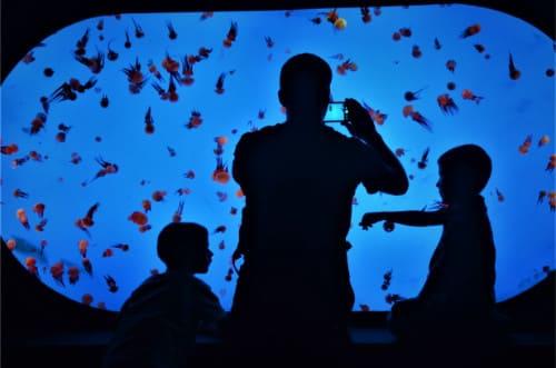 Aquarium en famille Shanghai