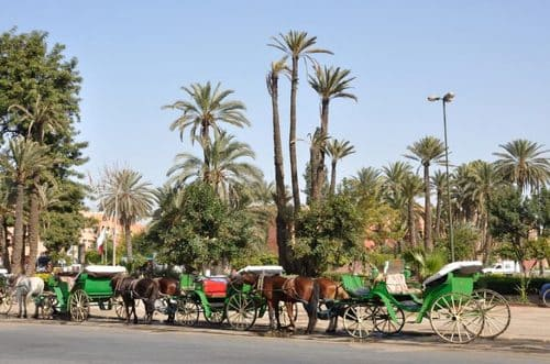 Calèche à Marrakech