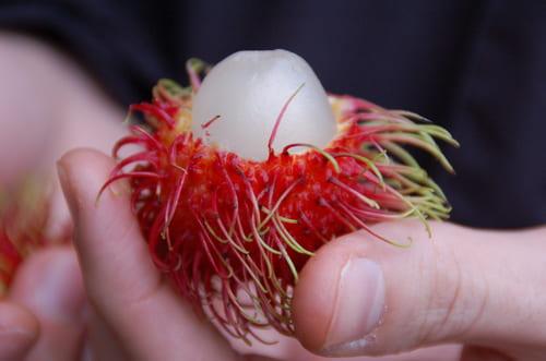 Nouveaux fruits au Costa Rica