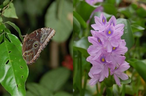 Papillon et orchidée costa rica