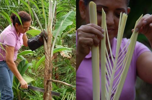 coupe des palmiers