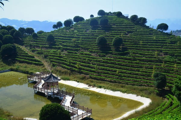 Panorama Yangshuo thé