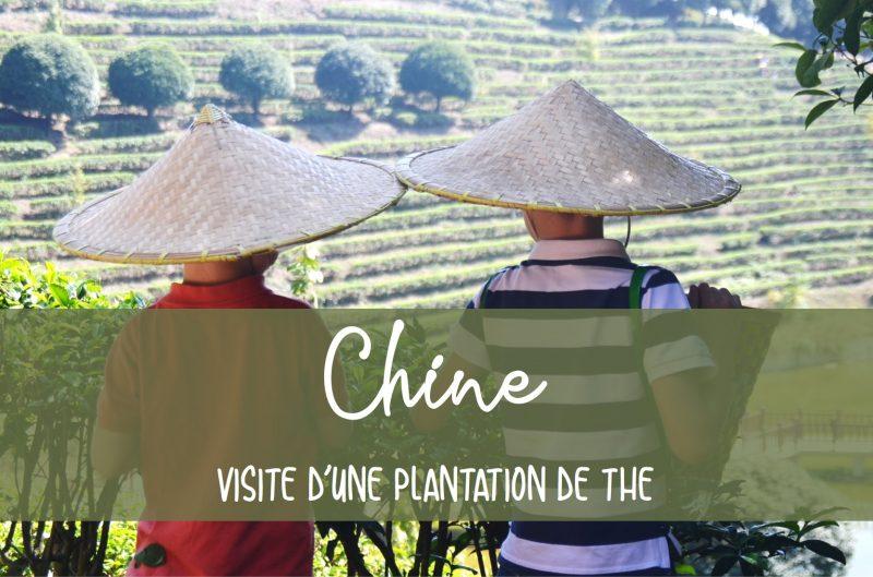 Visite plantation thé en Chine