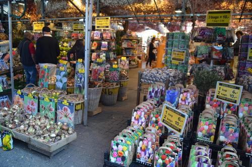 Le marché aux fleurs Amsterdam