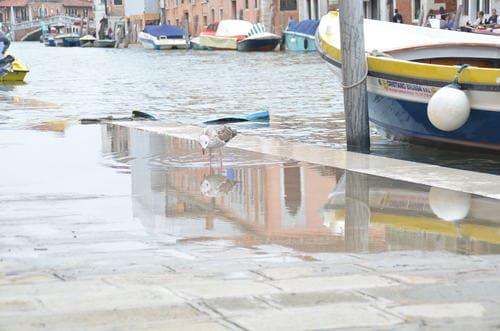 Acqua alta Venise