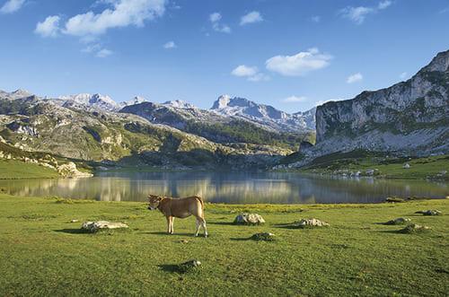 Picos de Europa lac
