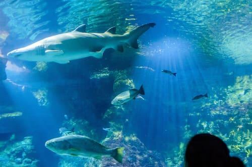 requins sous le tunnel de verre