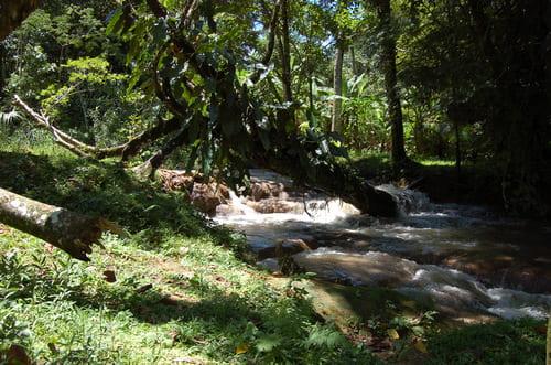 Zone non défrichée maya palenque