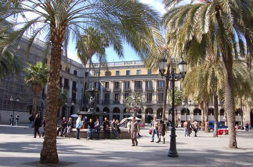 Palmiers de la placa real Barcelona