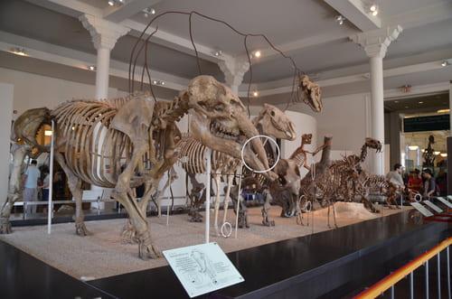 Visite de l'AMNH