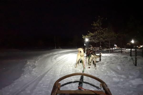 fin excursion chiens de traineaux