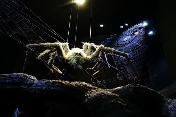 Grosse araignée dans la foret interdite