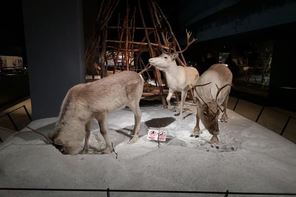 Visite musée arktikum