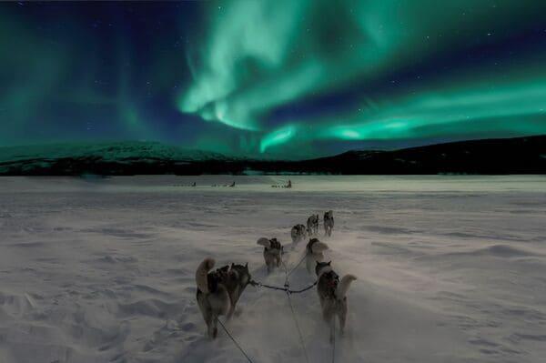 Sortie chiens de traineaux en Laponie
