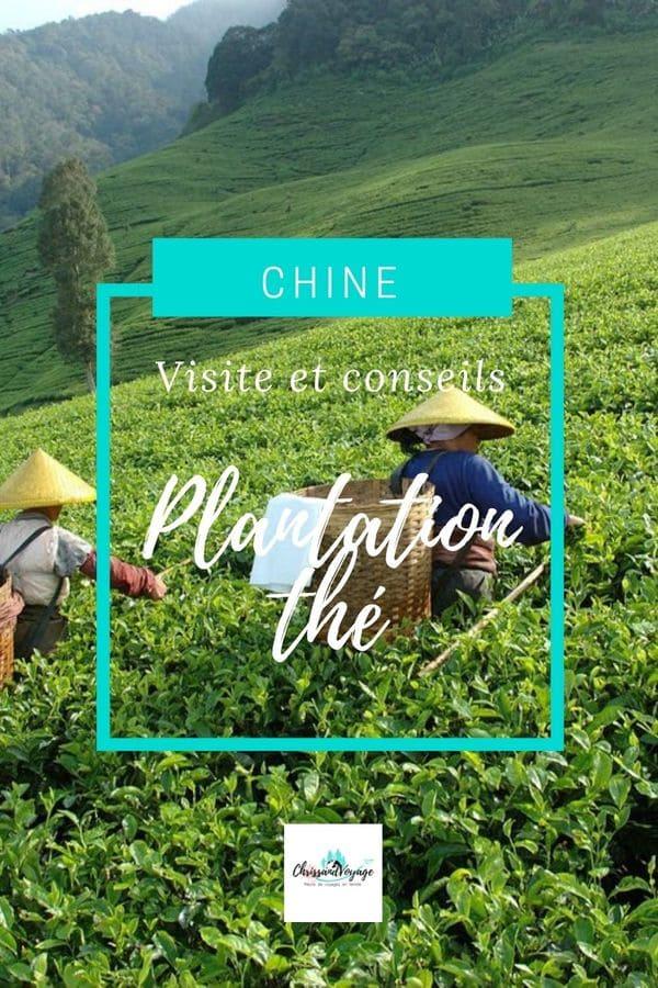Visite d'une plantation de thé en Chine
