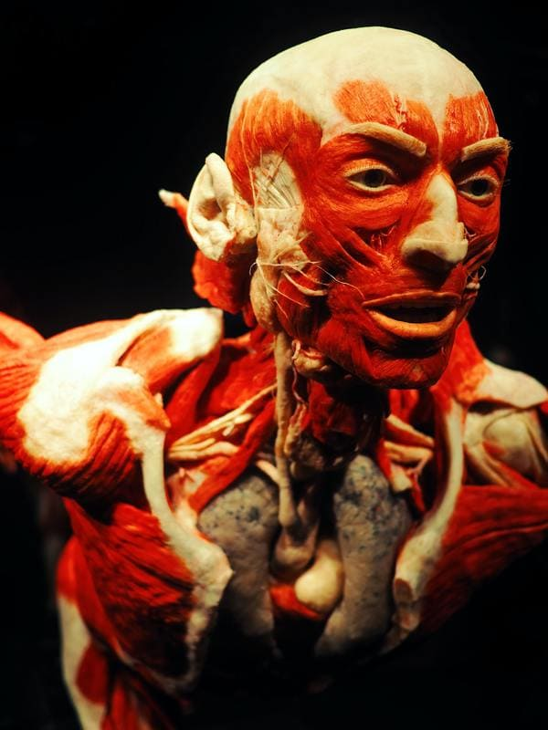 Exposition body worlds