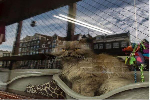 Péniche avec des chats à Amsterdam