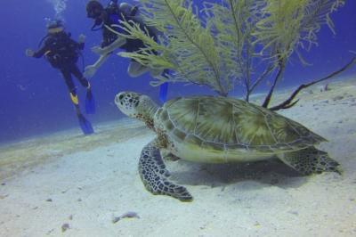 Où nager avec des tortues en Guadeloupe