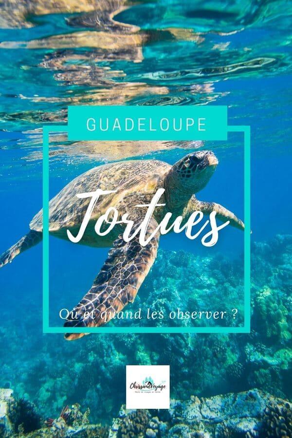 Quand voir des tortues en Guadeloupe ?
