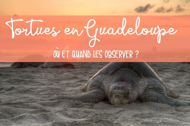 Où observer les tortues en Guadeloupe