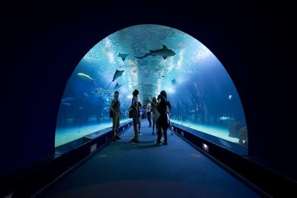 tunnel aquarium requin