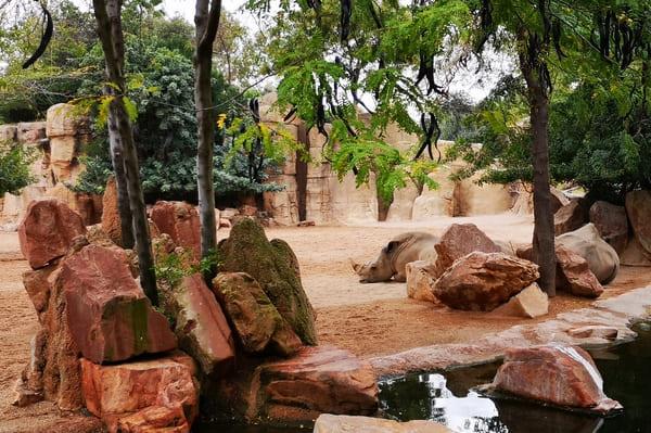 Enclos du bioparc de Valence